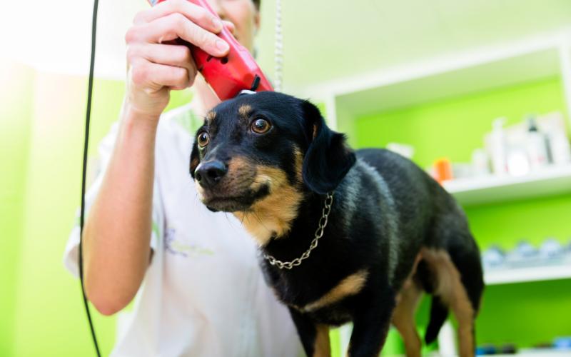 pets-regular-grooming